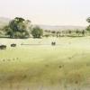 Watercolour landscape painting of Tumut farmland, NSW
