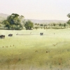 Watercolour landscape painting of Tumut farmland, NSW