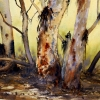 Watercolour painting of River Red Gums at the Flinders Ranges